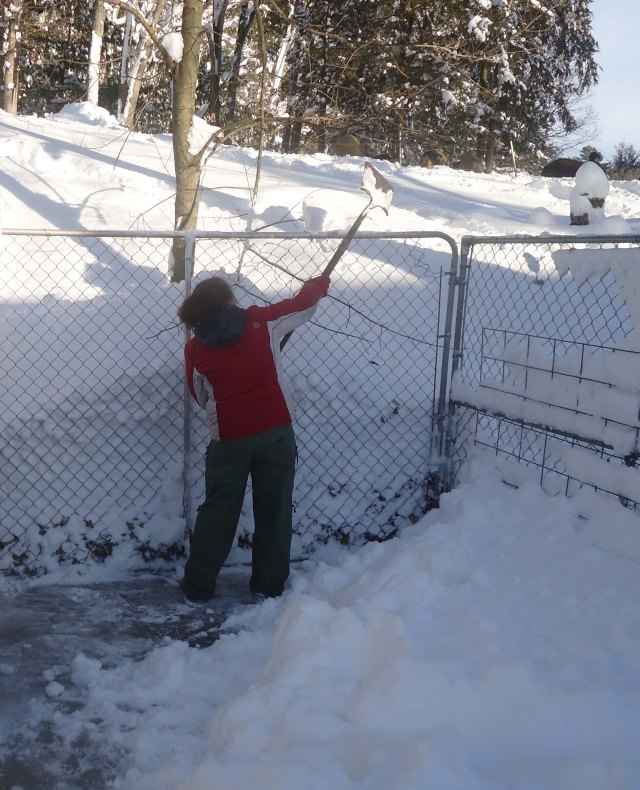 shoveling out the kennel